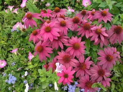 Beautiful, bountiful gardens, natural setting