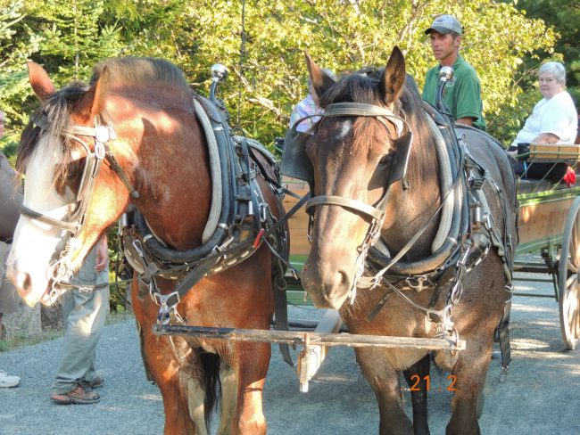 Horse drawn carriage, Acadia National Park, historical, outdoor activity
