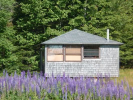 Log Cabin by the Sea, Hancock Point, lupine, forest