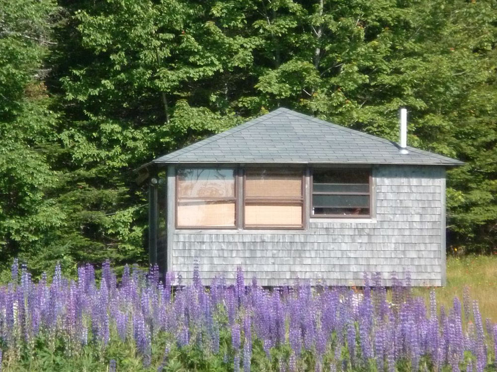 Log Cabin by the Sea, Hancock Point, ocean and Mount Desert Island views, lupine, forest
