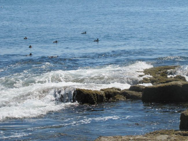 Ship Harbor, waves, rocks, ledges, sea birds
