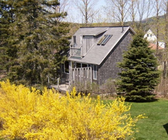 Carriage House and forsythia