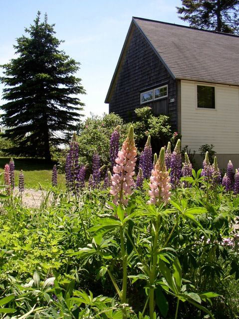 Lupines at Carriage House, Bass Harbor Cottages and Country Inn, oceanfront, vacation rental