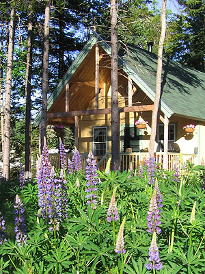 Lupines at Blackberry Cottage, June