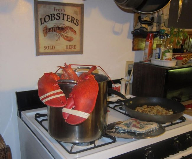 Giant lobster cooking in kitchen